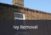 Ivy  Removals experts
