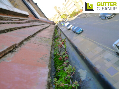 expert gutter maintenance from Gutter Cleanup